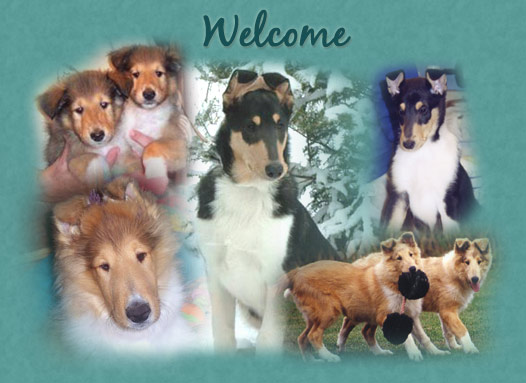 wisconsin collie breeder